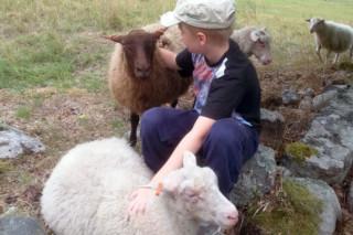 Houtskarin lammastila